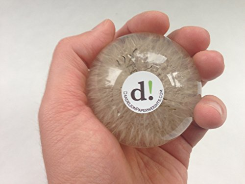 Dandelion-Paperweight-0-4